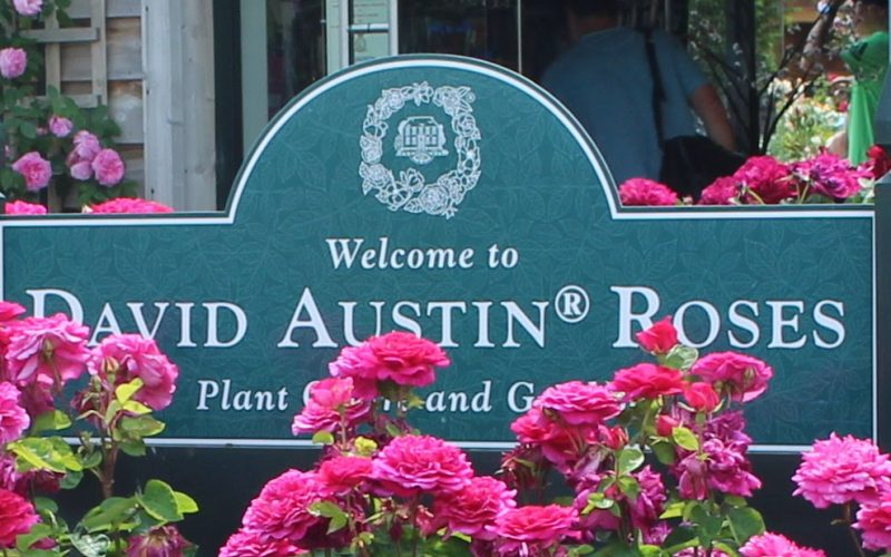 Garden Roses David Austin  Luxury Collection. Who is David Austin ?