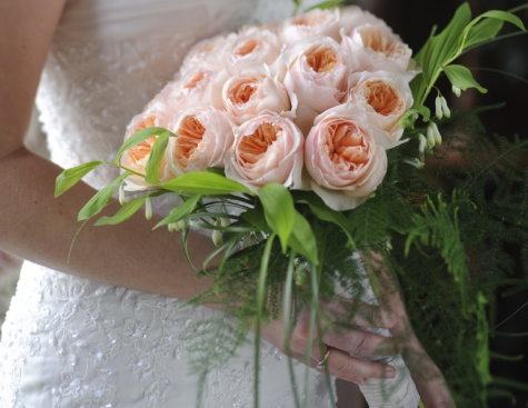 David_Austin_Wedding_Rose_Juliet_