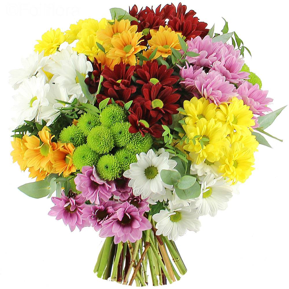 bouqet chrysanthemus 1