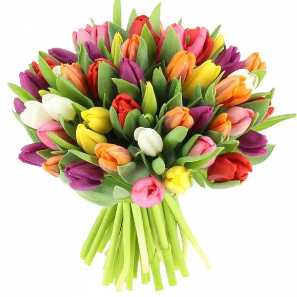 tulips 1 ΧΑΡΑ