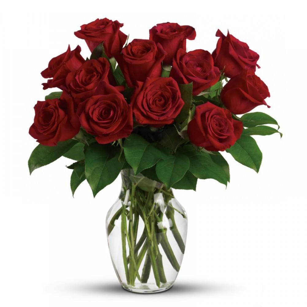 12 red Naomi roses