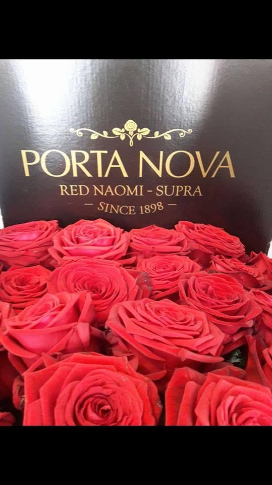 RED NAOMI PORTA NOVA