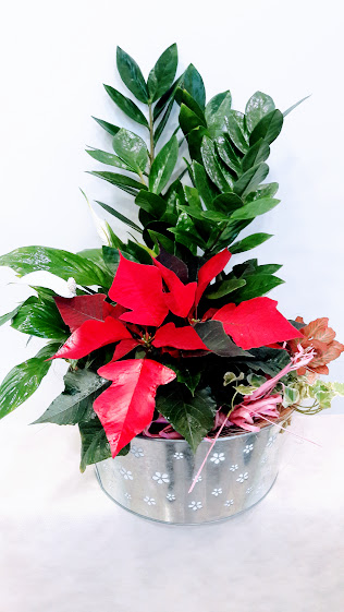 plants arrangement christmas zink