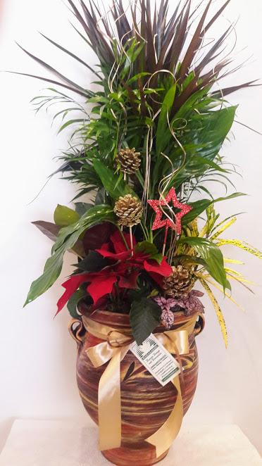 plants arrangements ceramic pot big