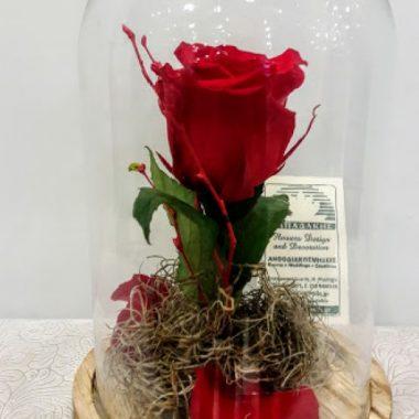 Τριαντάφυλλα για πάντα Roses for ever Αποχυμωμένα τριαντάφυλλα