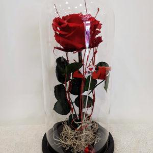 forever red roses big