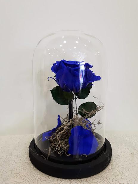 forever rose bleu in glass