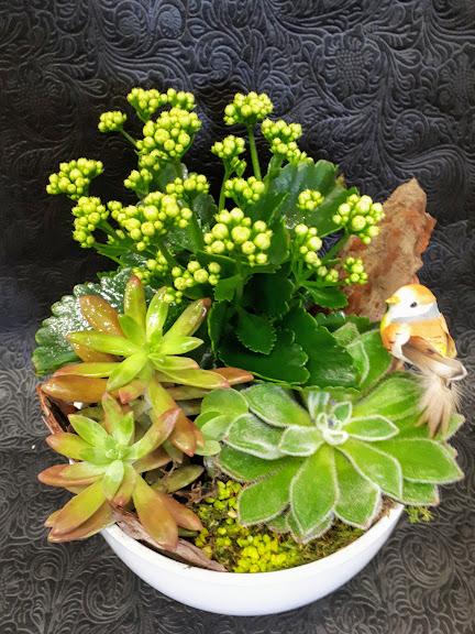 σύνθεση με παχύφυτα σε κεραμικό Δ20εκ succulents