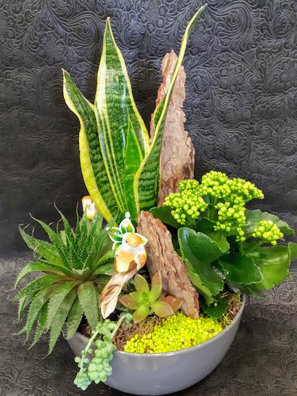 σύνθεση με παχύφυτα σε κεραμικό Δ25εκ succulents