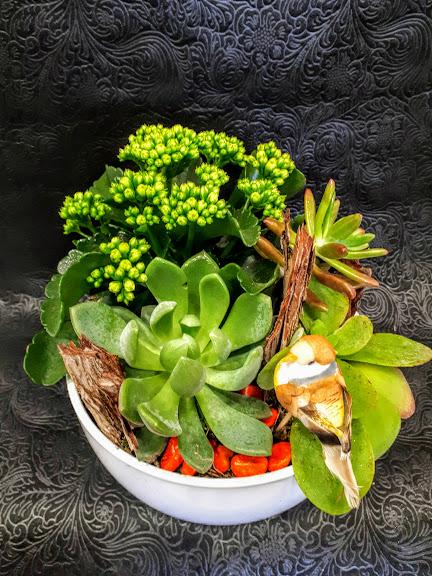 σύνθεση με παχύφυτα σε κεραμικό plants succulents