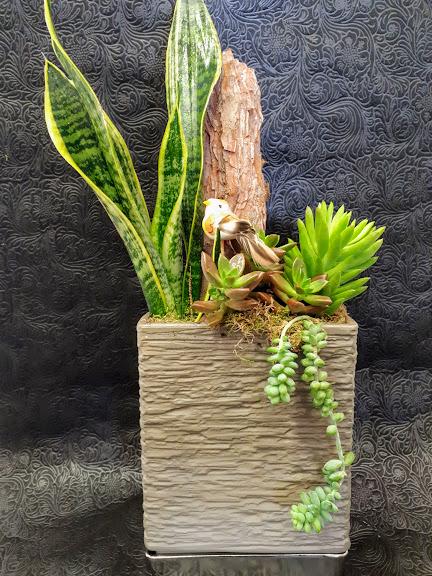 σύνθεση με παχύφυτα σε κεραμικό succulents