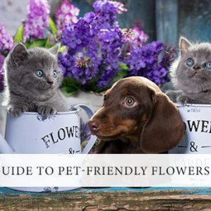 Top Pet-Friendly Flowers and Plants    τα Ανθη και τα  ζώα