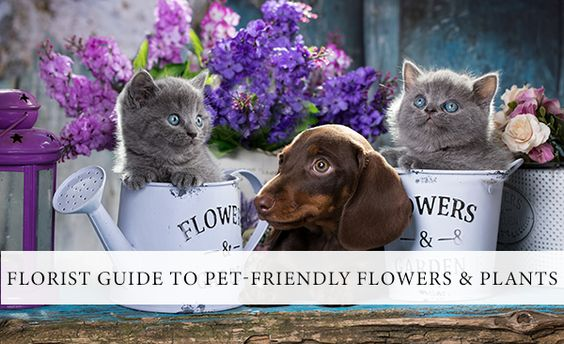 Top Pet-Friendly Flowers and Plants    τα Ανθη και τα  ζώα