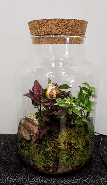 florarium interior plant in vase h27cm