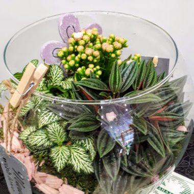 round florarium plants vase γυάλα με φυτά
