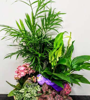 συνθεση με φυτα σε κεραμικη πιατελα υψους 50 εκ