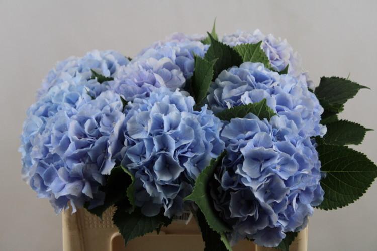 verena bleu μπλε