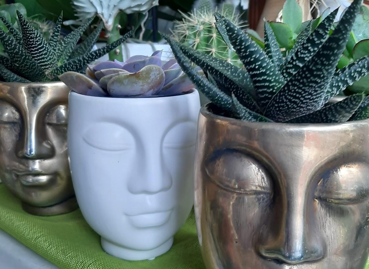 20210409_183649 faces plants