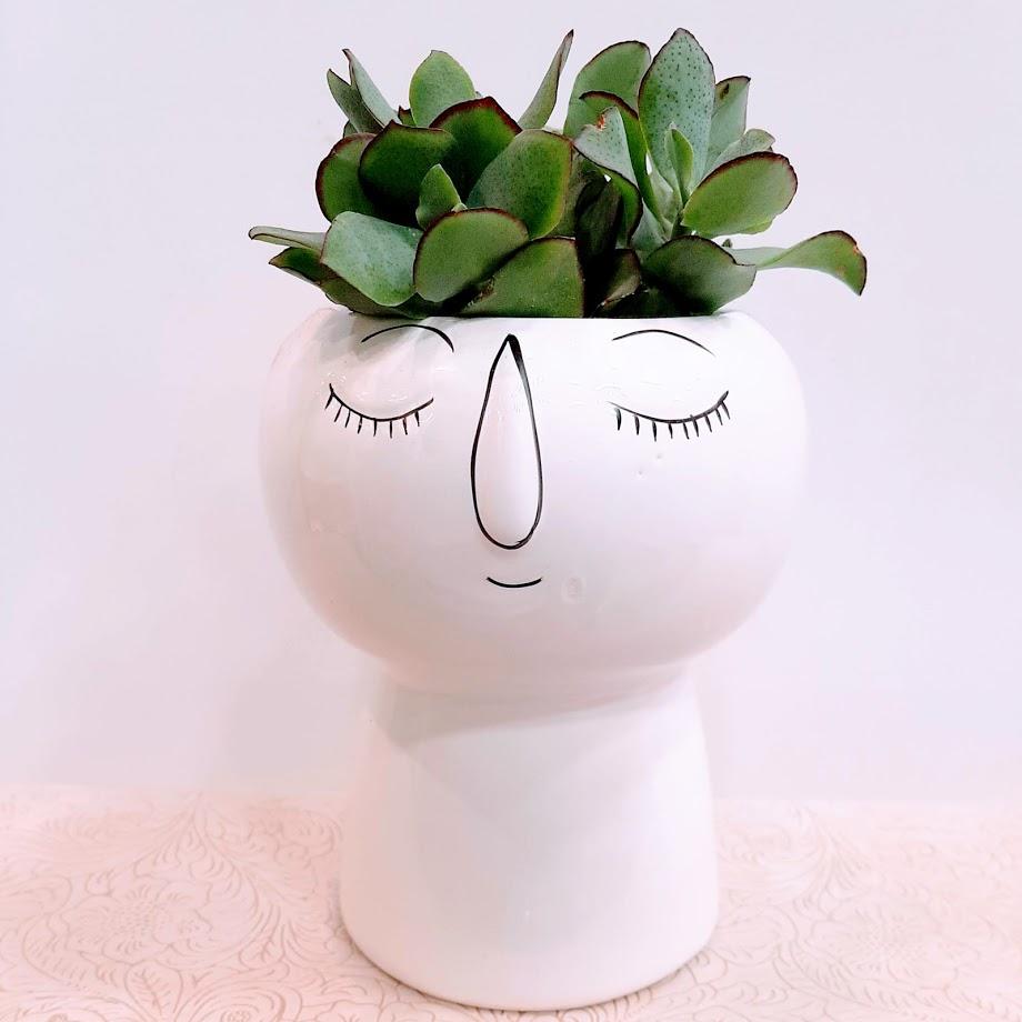 plant  in face white big pot